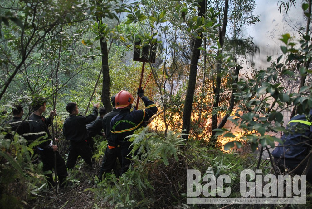 Các đám cháy rừng tại Yên Dũng đã được khống chế